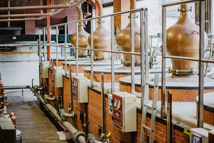 Expérience immersion – Cognac De Luze à Angeac-Champagne - 0