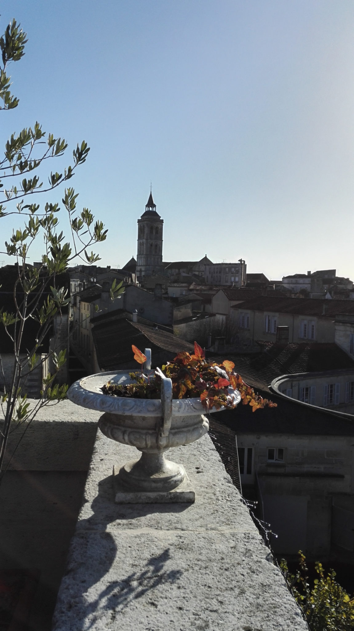 Les toits de Cognac noircis par le Torula Compniacensis