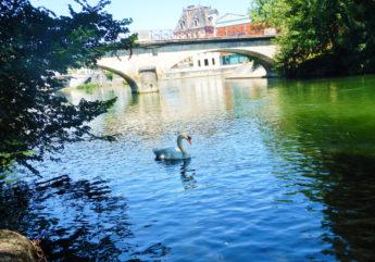 378240-0817-Jarnac-.-Fleuve.-Charente-.-Cygne.-Pont-1-.jpg