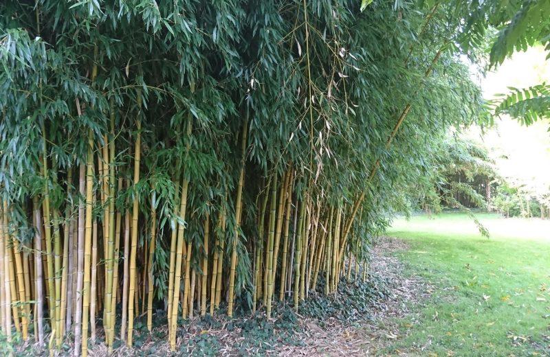 La Bambouseraie à Matha - 1
