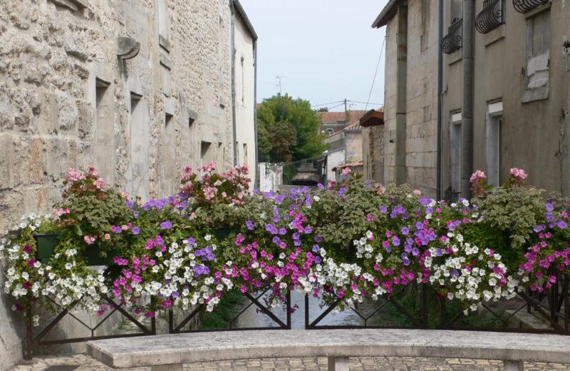 Walk in Châteauneuf-sur-Charente à Châteauneuf-sur-Charente - 2