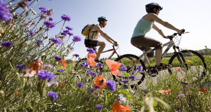Balade en vélo dans le vignoble