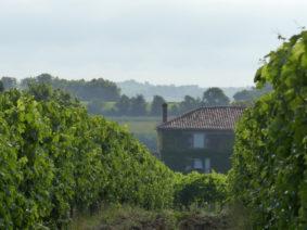 vins-charentais-igp-vignes-copyright-pascal-gonthier