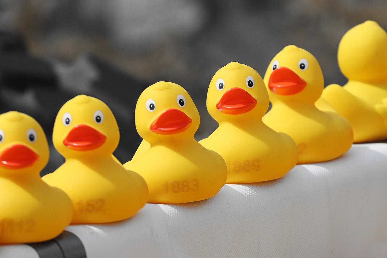 Duck Race sur la Charente pendant la Fête du Fleuve à Jarnac