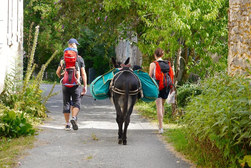 Balade autour de la Destination Cognac avec les ânes de la rêverie