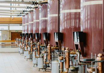 Expérience initiation visite des cognacs De Luze