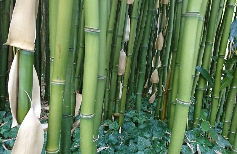 La Bambouseraie à Matha - 4