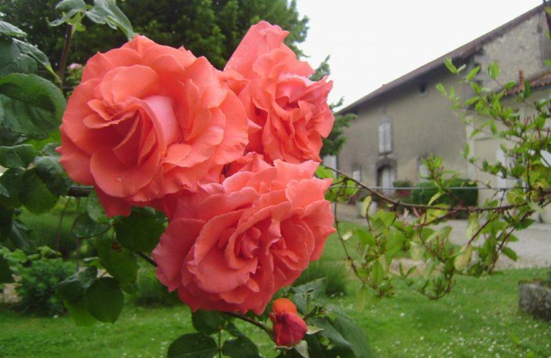 Meublé_jusqu'à 4pers – La Noisée à Lignières-Sonneville - 19