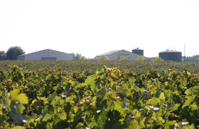 Cognac Chollet à Boutiers-Saint-Trojan - 1