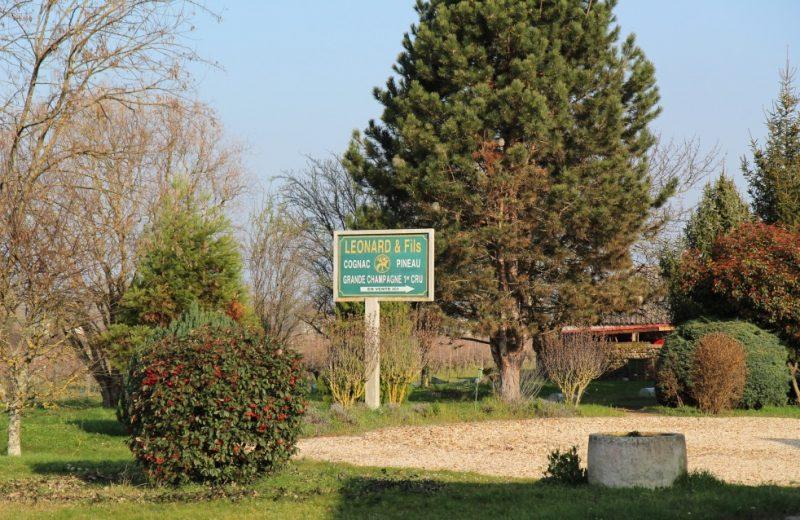 Léonard Pineau Cognac à Mainxe-Gondeville - 0
