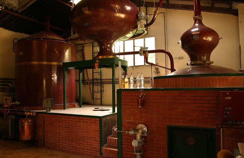 Cognac Painturaud Frères à Segonzac - 1