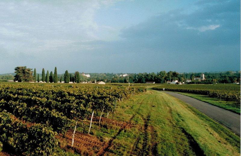 Domaine Pautier Pineau à Bourg-Charente - 1