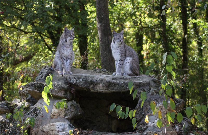 Zoodyssée à Villiers-en-Bois - 5