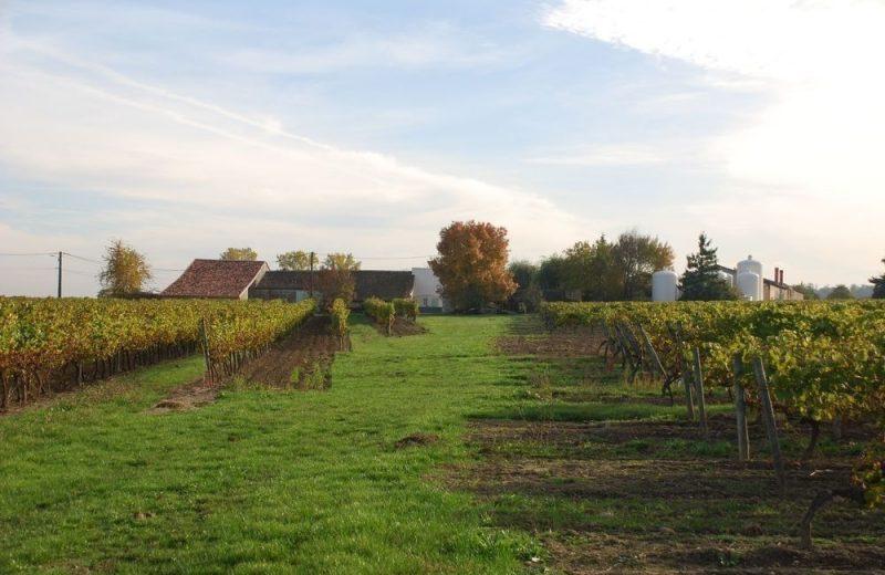 Meublé_jusqu'à 6pers – Gîtes de la Tacharderie – Côté vignes à Cherves-Richemont - 14