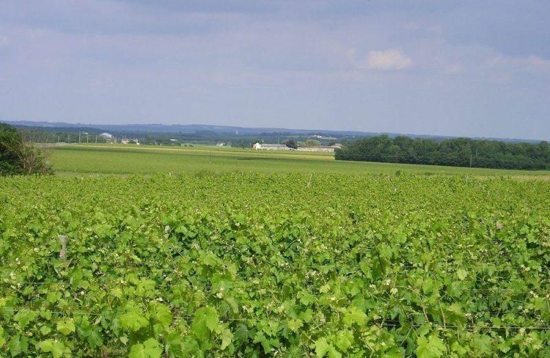 Meublé_jusqu'à 6pers – Gîtes de la Tacharderie – Côté vignes à Cherves-Richemont - 15