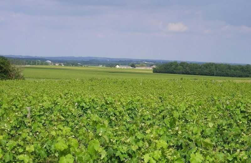 Meublé_jusqu'à 6pers – Gîtes de la Tacharderie – L'alambic à Cherves-Richemont - 14