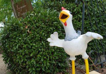 des-poules-au-jardin-respectueux.jpg